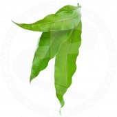 Mango leaves 5pces