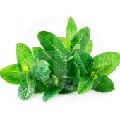 MINT Leaves Fresh 100g