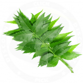 Neem leaves 40g