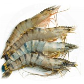 Shrimps blacktiger 8/12...