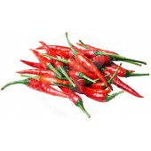 Red chillies THAI fresh 100g