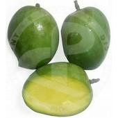 Mangoes Rajapuri FRESH...