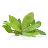 Bay leaves FRESH 50g